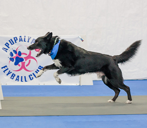 <a href='flyball.html'>What is Flyball?</a>